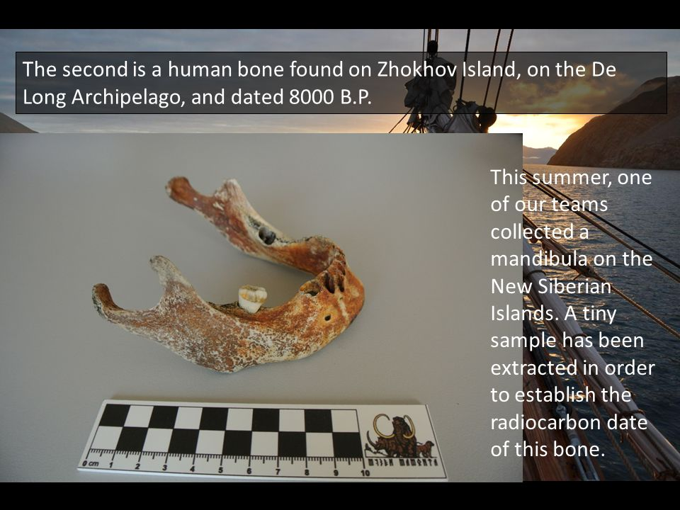 The second is a human bone found on Zhokhov Island, on the De Long Archipelago, and dated 8000 B.P.