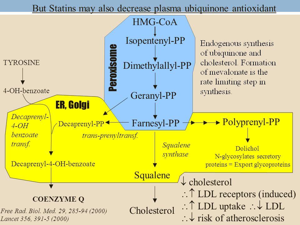  cholesterol  LDL receptors (induced)  LDL uptake  LDL  risk of atherosclerosis Isopentenyl-PP Dimethylallyl-PP Geranyl-PP Farnesyl-PP Squalene synthase Squalene Cholesterol Decaprenyl-PP TYROSINE 4-OH-benzoate Decaprenyl- 4-OH benzoate transf.