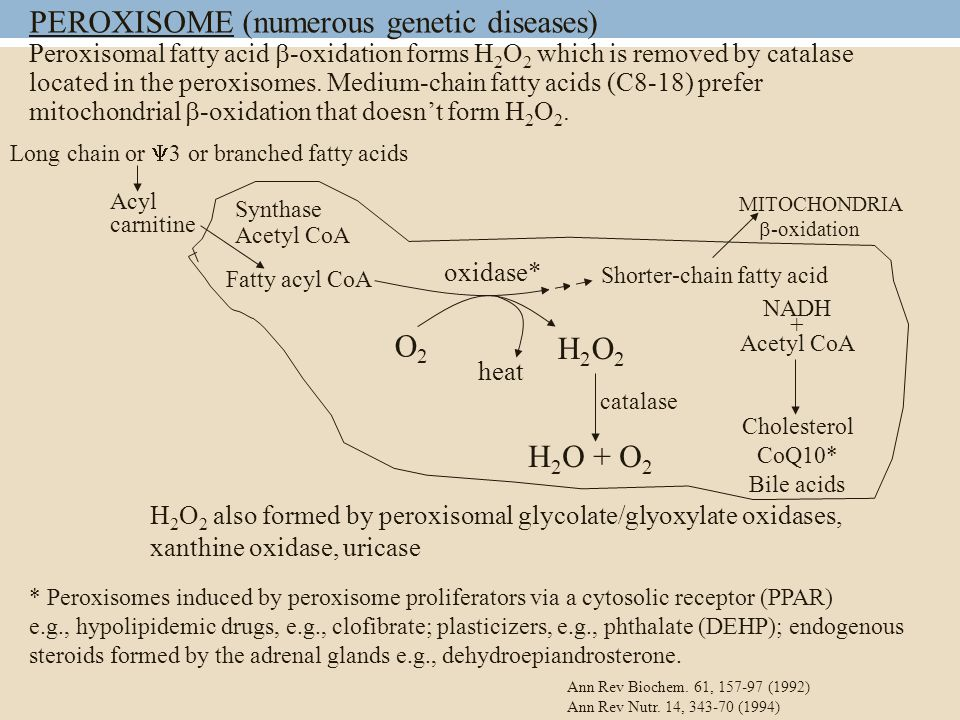 PEROXISOME (numerous genetic diseases) Peroxisomal fatty acid  -oxidation forms H 2 O 2 which is removed by catalase located in the peroxisomes.