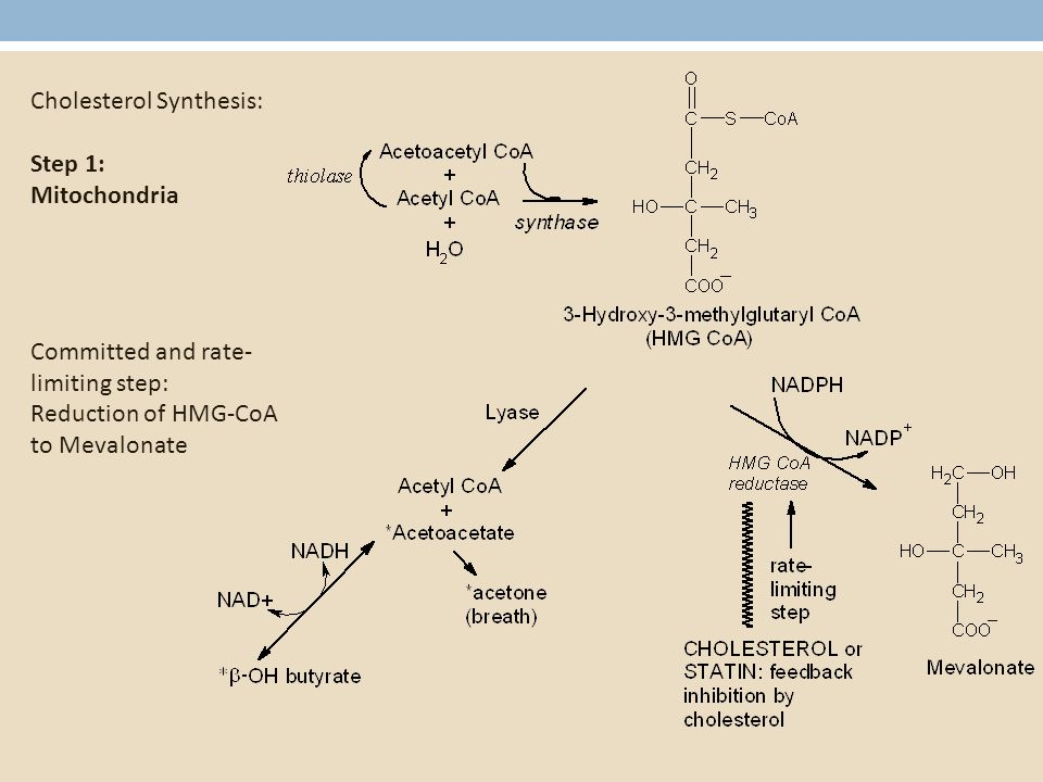 Cholesterol Synthesis: Step 1: Mitochondria Committed and rate- limiting step: Reduction of HMG-CoA to Mevalonate