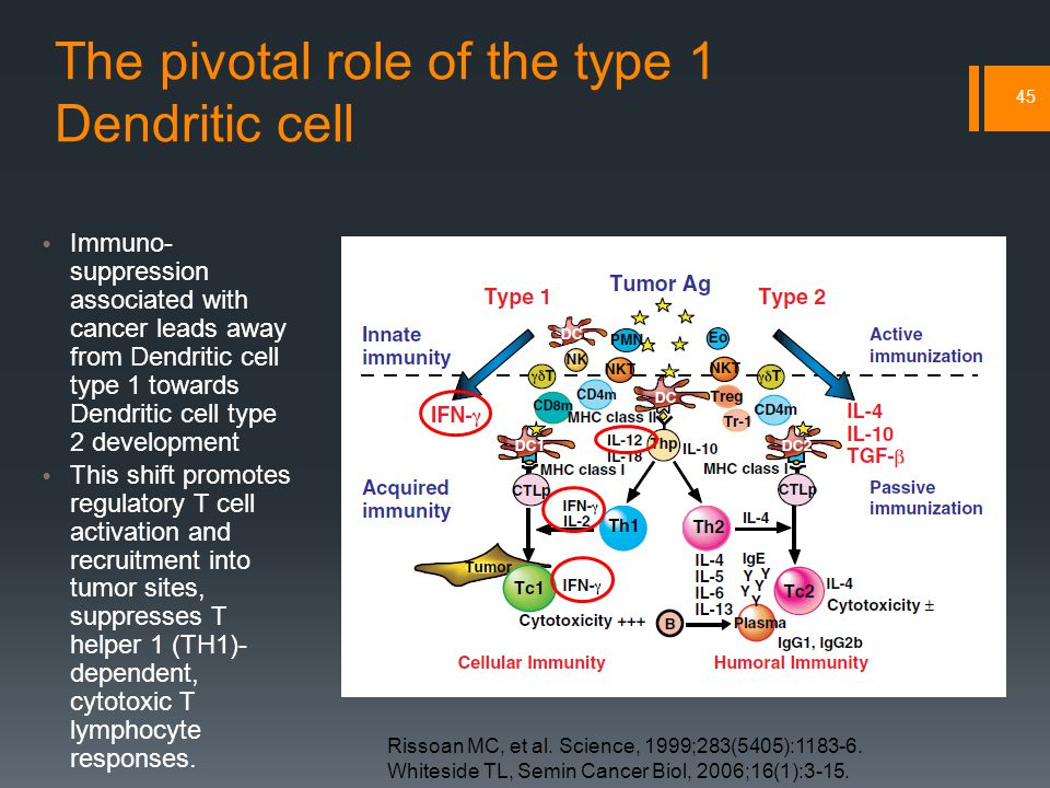 The pivotal role of the type 1 Dendritic cell 45 Immuno- suppression associated with cancer leads away from Dendritic cell type 1 towards Dendritic cell type 2 development This shift promotes regulatory T cell activation and recruitment into tumor sites, suppresses T helper 1 (TH1)- dependent, cytotoxic T lymphocyte responses.