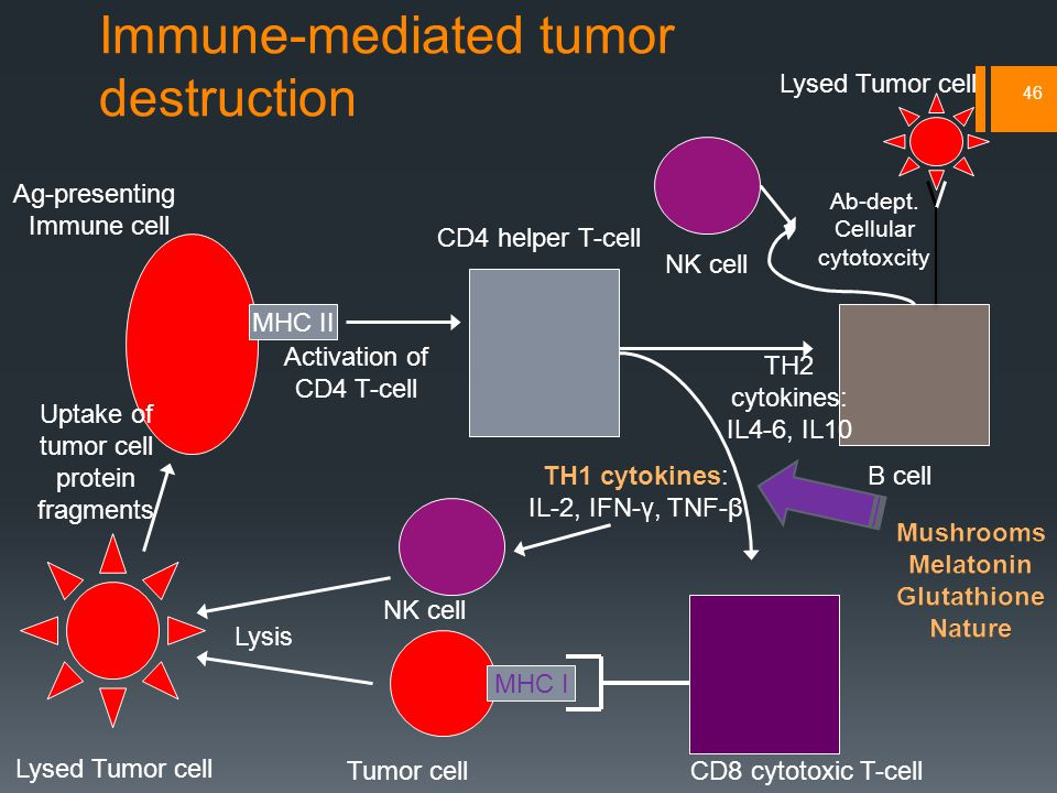 Immune-mediated tumor destruction 46 Tumor cell Lysed Tumor cell CD8 cytotoxic T-cell CD4 helper T-cell Ag-presenting Immune cell Uptake of tumor cell protein fragments MHC II Activation of CD4 T-cell TH1 cytokines: IL-2, IFN-γ, TNF-β MHC I Lysis NK cell B cell Ab-dept.