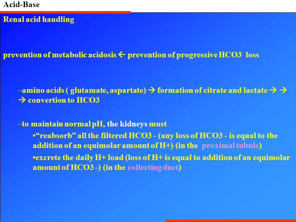 Acid-Base Renal acid handling prevention of metabolic acidosis  prevention of progressive HCO3 loss –amino acids ( glutamate, aspartate)  formation of citrate and lactate    convertion to HCO3 –to maintain normal pH, the kidneys must reabsorb all the filtered HCO3 - (any loss of HCO3 - is equal to the addition of an equimolar amount of H+) (in the proximal tubule) excrete the daily H+ load (loss of H+ is equal to addition of an equimolar amount of HCO3 -) (in the collecting duct)