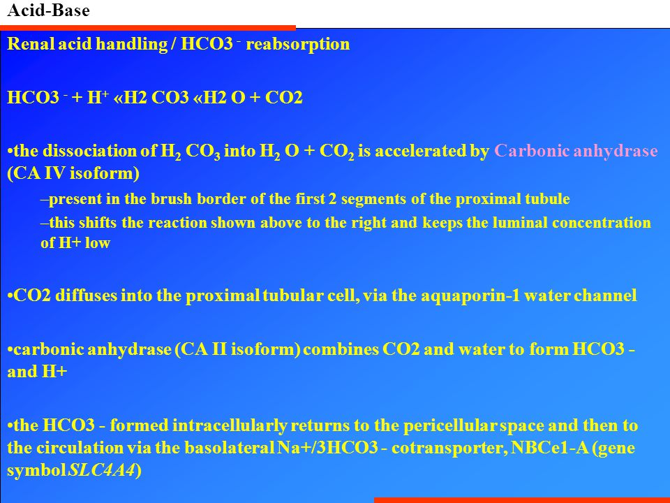Acid-Base Renal acid handling / HCO3 - reabsorption HCO3 - + H + «H2 CO3 «H2 O + CO2 the dissociation of H 2 CO 3 into H 2 O + CO 2 is accelerated by