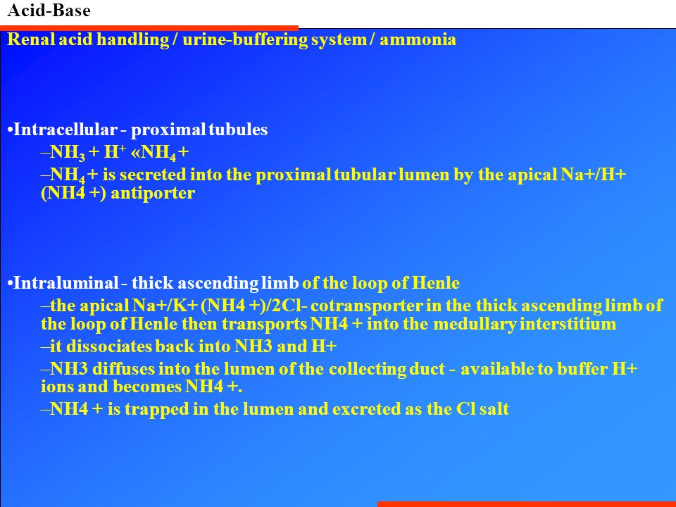 Acid-Base Renal acid handling / urine-buffering system / ammonia Intracellular - proximal tubules –NH 3 + H + «NH 4 + –NH 4 + is secreted into the pro