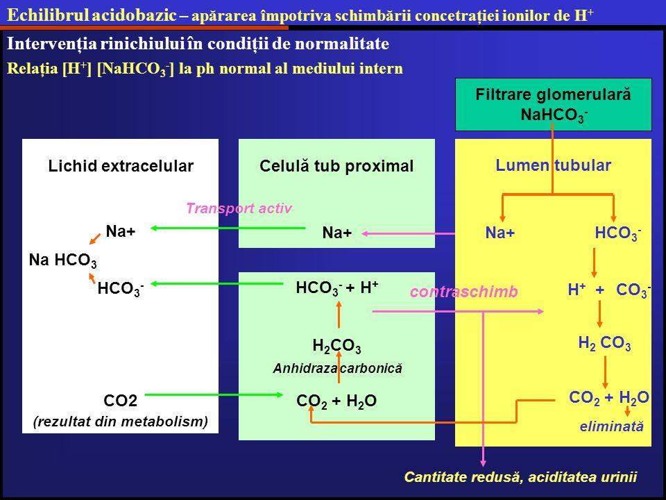 Echilibrul acidobazic – apărarea împotriva schimbării concetraţiei ionilor de H + Intervenţia rinichiului în condiţii de normalitate Relaţia [H + ] [NaHCO 3 - ] la ph normal al mediului intern Filtrare glomerulară NaHCO 3 - H + + CO 3 - H 2 CO 3 Celulă tub proximal Na+ CO 2 + H 2 O eliminată H 2 CO 3 Anhidraza carbonică HCO 3 - + H + Cantitate redusă, aciditatea urinii Lichid extracelular Na+ Transport activ contraschimb CO2 (rezultat din metabolism) HCO 3 - Na HCO 3 Na+ HCO 3 - Lumen tubular CO 2 + H 2 O