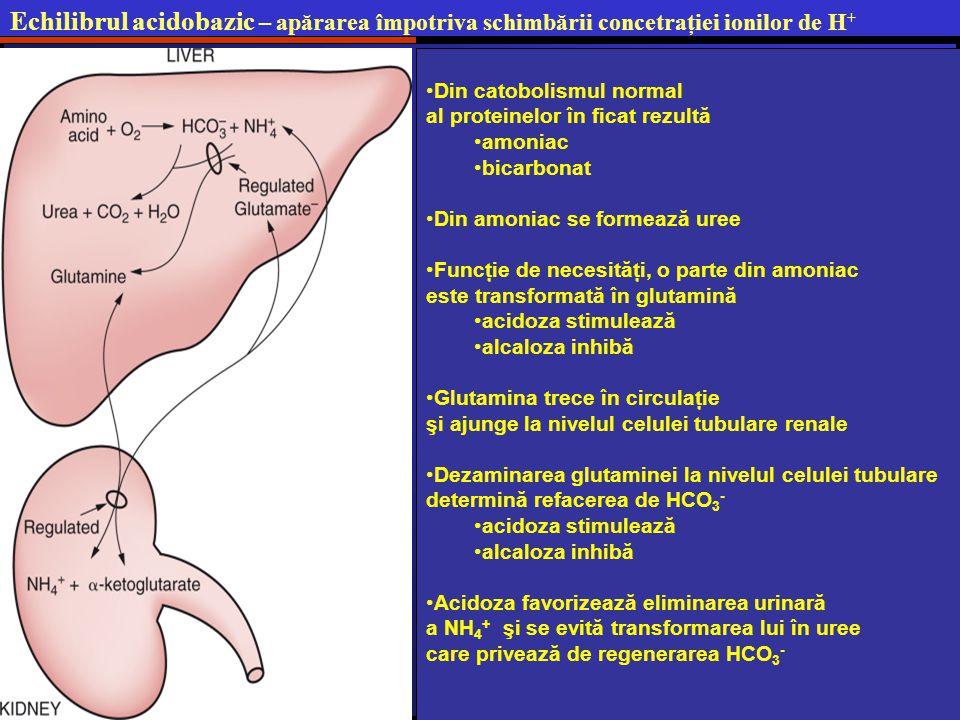 Echilibrul acidobazic – apărarea împotriva schimbării concetraţiei ionilor de H + Din catobolismul normal al proteinelor în ficat rezultă amoniac bicarbonat Din amoniac se formează uree Funcţie de necesităţi, o parte din amoniac este transformată în glutamină acidoza stimulează alcaloza inhibă Glutamina trece în circulaţie şi ajunge la nivelul celulei tubulare renale Dezaminarea glutaminei la nivelul celulei tubulare determină refacerea de HCO 3 - acidoza stimulează alcaloza inhibă Acidoza favorizează eliminarea urinară a NH 4 + şi se evită transformarea lui în uree care privează de regenerarea HCO 3 -