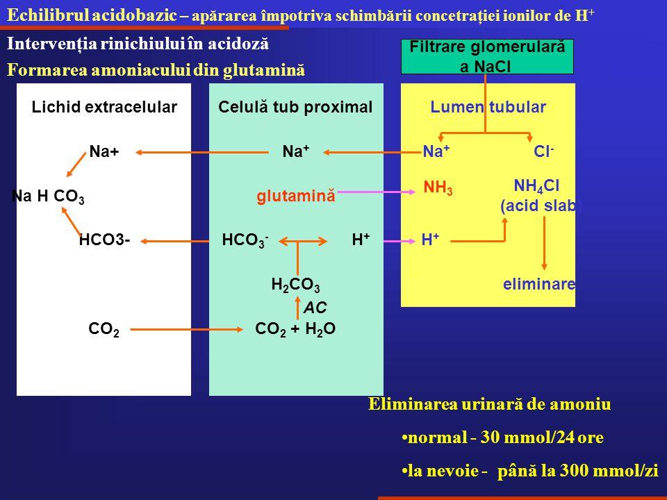 Echilibrul acidobazic – apărarea împotriva schimbării concetraţiei ionilor de H + Intervenţia rinichiului în acidoză Formarea amoniacului din glutamină H+H+ Lumen tubular NH 4 Cl (acid slab) Na + Cl - Filtrare glomerulară a NaCl Na + Celulă tub proximalLichid extracelular Na+ Na H CO 3 HCO3- H 2 CO 3 HCO 3 - H + CO 2 + H 2 OCO 2 AC eliminare glutamină NH 3 Eliminarea urinară de amoniu normal - 30 mmol/24 ore la nevoie - până la 300 mmol/zi