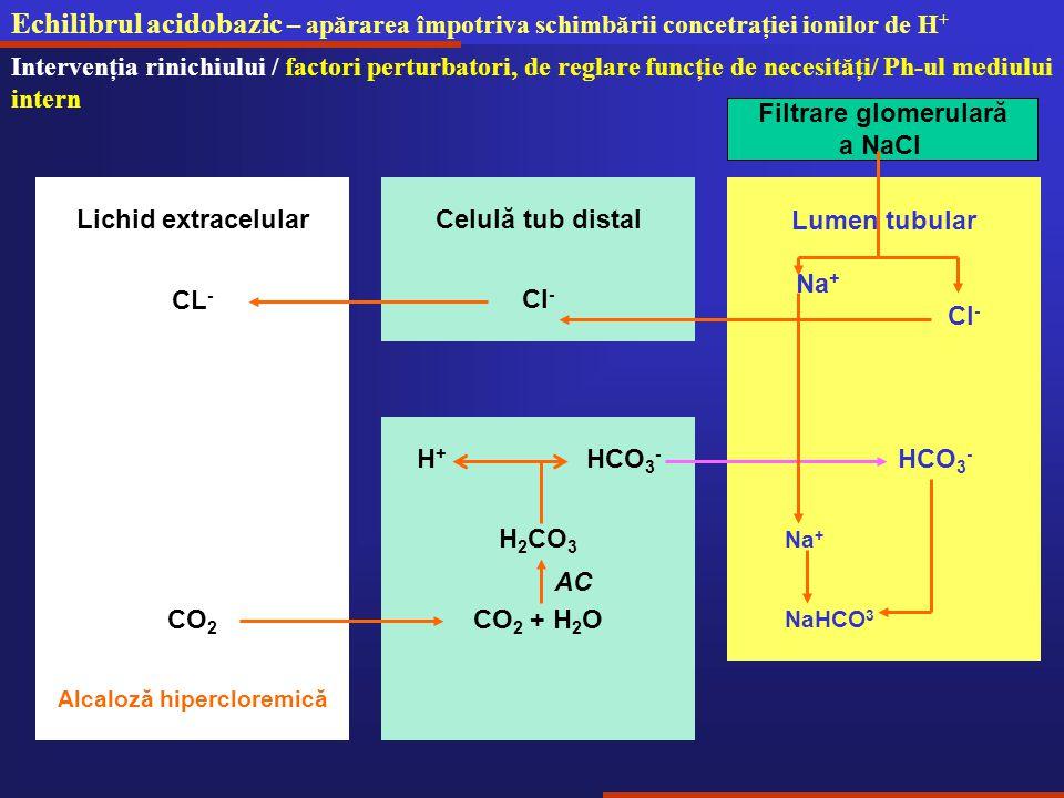 Echilibrul acidobazic – apărarea împotriva schimbării concetraţiei ionilor de H + Intervenţia rinichiului / factori perturbatori, de reglare funcţie de necesităţi/ Ph-ul mediului intern Lumen tubular Na + Cl - Filtrare glomerulară a NaCl Cl - Celulă tub distalLichid extracelular CL - H 2 CO 3 H + HCO 3 - CO 2 + H 2 O Alcaloză hipercloremică CO 2 AC HCO 3 - Na + NaHCO 3