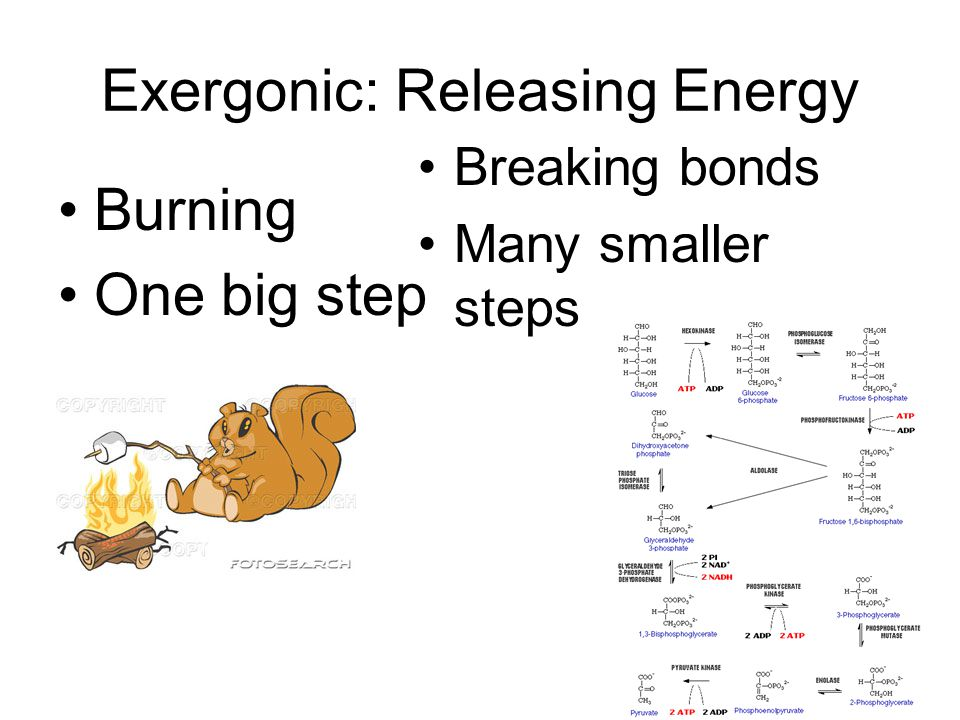 Exergonic Reaction Releases Energy Begins with reactants whose covalent bonds contain more energy than its products