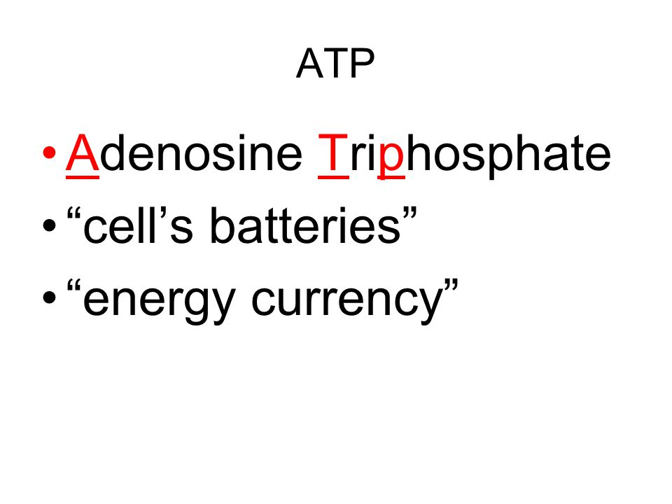 ATP No…not the new rock band from Japan Well, what is it?