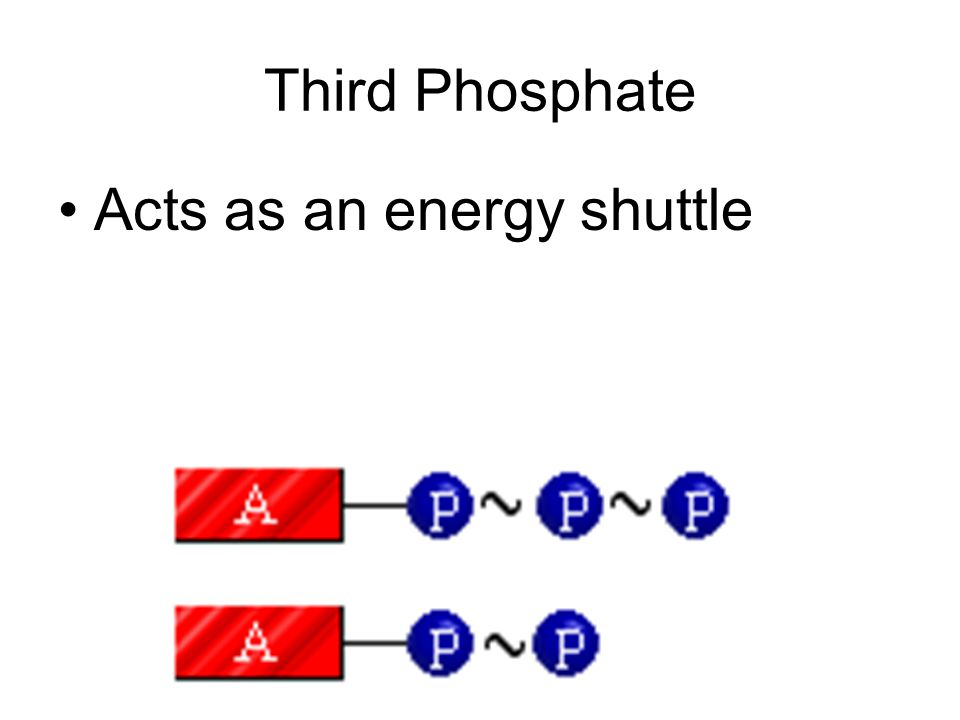 How are they different? Adenosine triphosphate Adenosine diphosphate