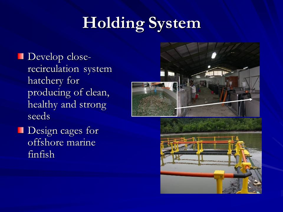 Holding System Develop close- recirculation system hatchery for producing of clean, healthy and strong seeds Design cages for offshore marine finfish