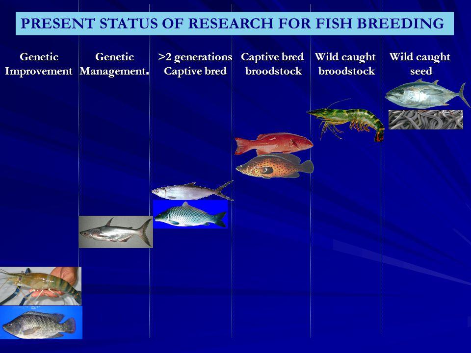 Wild caught seed Wild caught broodstock Captive bred broodstock >2 generations Captive bred Genetic Management. GeneticImprovement PRESENT STATUS OF R