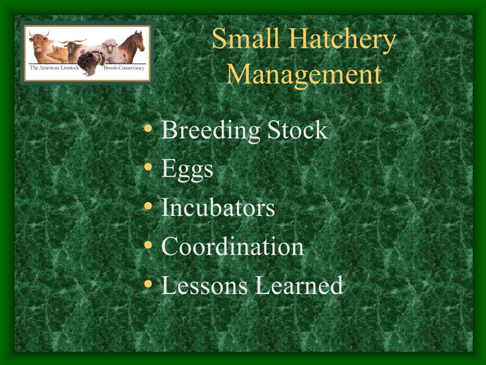 Small Hatchery Management - Breeding Stock - Fertility Egg Production Feed Requirements