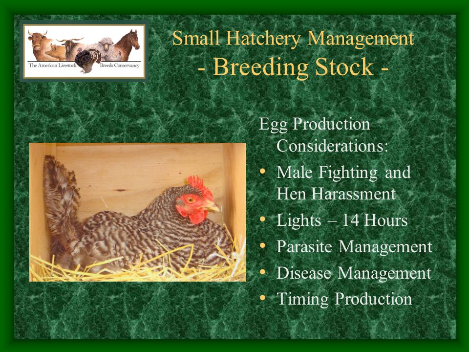Small Hatchery Management - Incubators - Cleanliness Considerations: Clean Incubator and Hatcher at Start of Season Separate Hatcher allows Succession Settings without Debris Concerns Use 1-2 Tablespoons of Pinesol per Gallon of Water for Humidity Dry, Vacuum, and Spray between Hatches