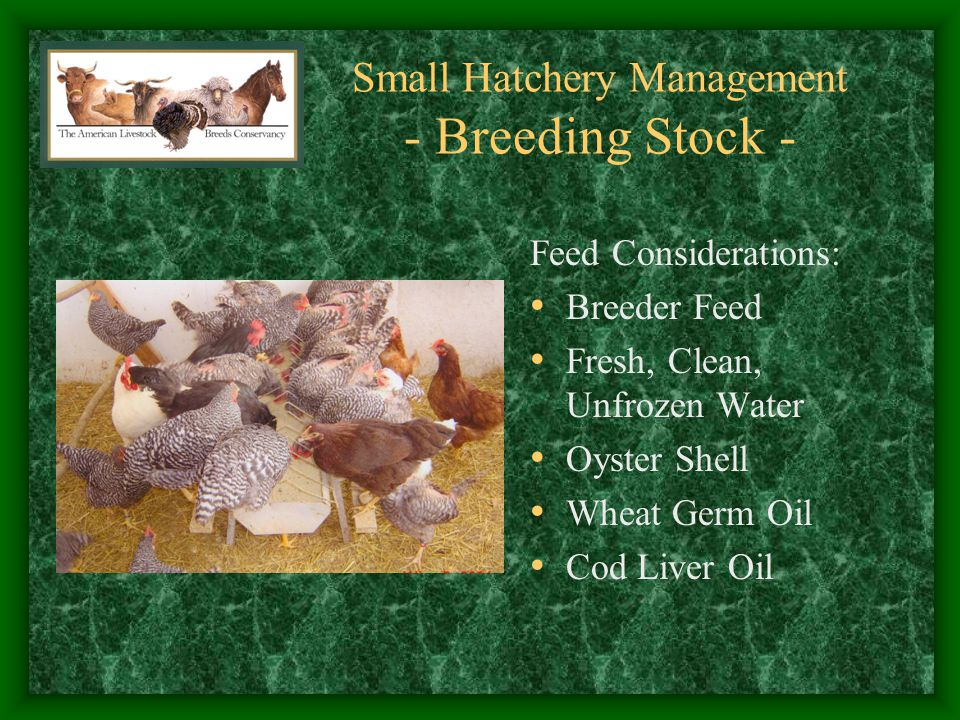 Small Hatchery Management - Coordination - Hatch Planning Chick Distribution Cleaning Cycle vs.