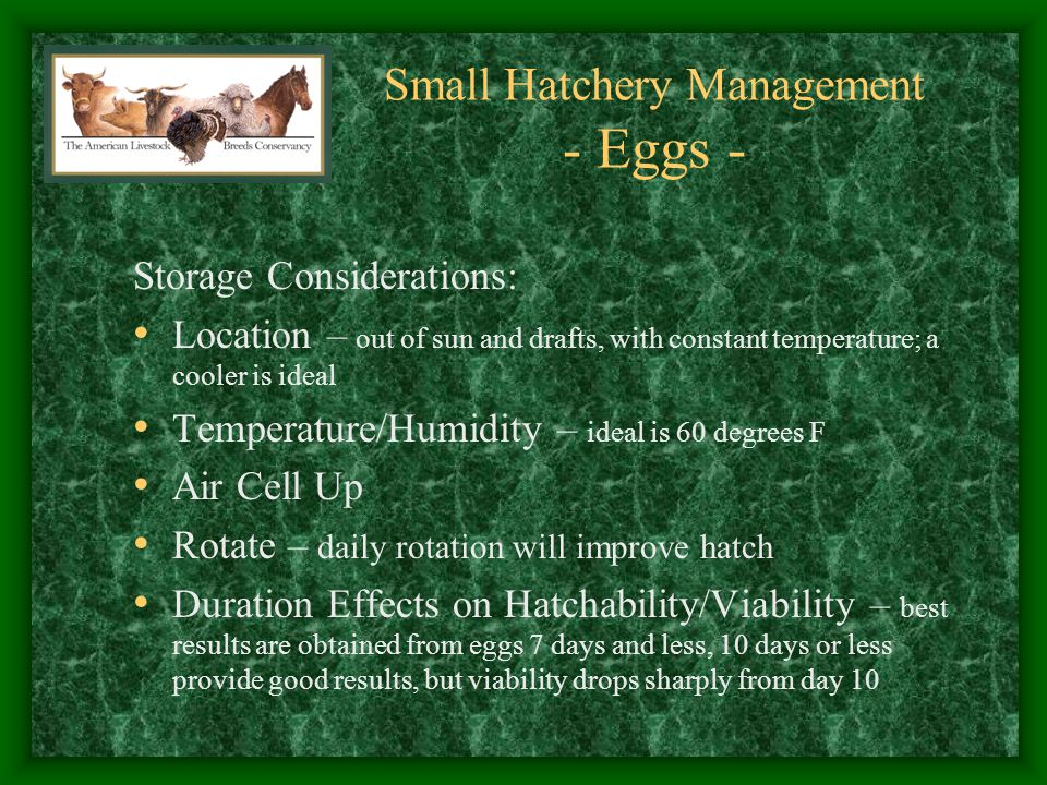Small Hatchery Management - Eggs - Condition Considerations: Odd Shapes – likely not viable; may indicate poor air cell position Cracks – will allow entry of bacteria; can be sealed using candle wax Dirt – infect incubator with bacteria; wet dirty eggs likely not to hatch due to infectious agents being drawn into the egg