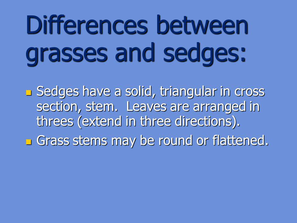 Differences between grasses and sedges: Sedges have a solid, triangular in cross section, stem.