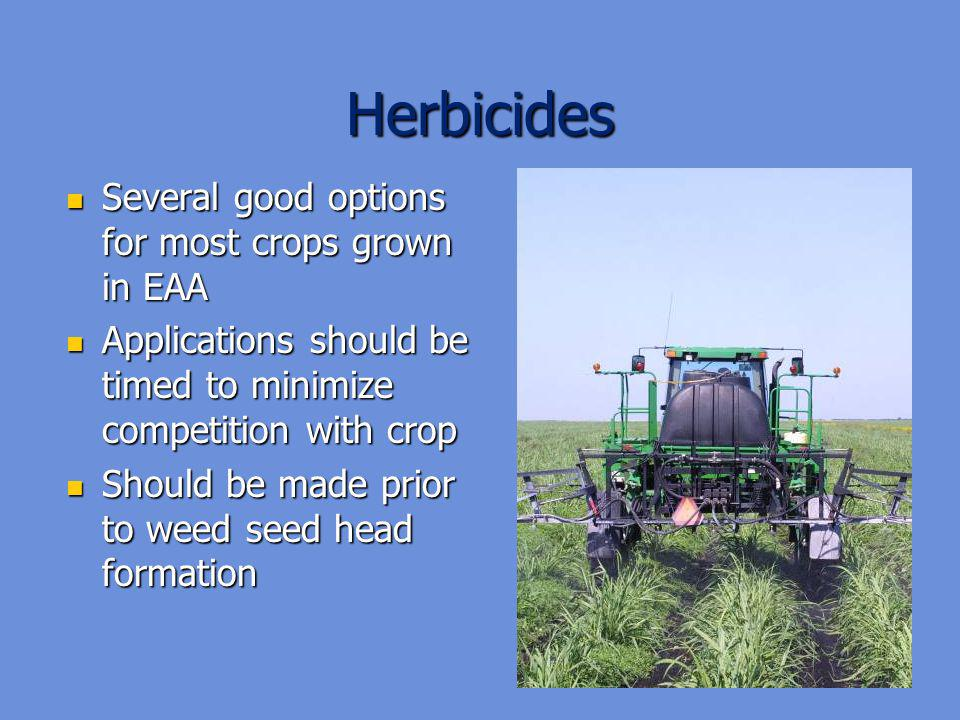 Herbicides Several good options for most crops grown in EAA Several good options for most crops grown in EAA Applications should be timed to minimize competition with crop Applications should be timed to minimize competition with crop Should be made prior to weed seed head formation Should be made prior to weed seed head formation