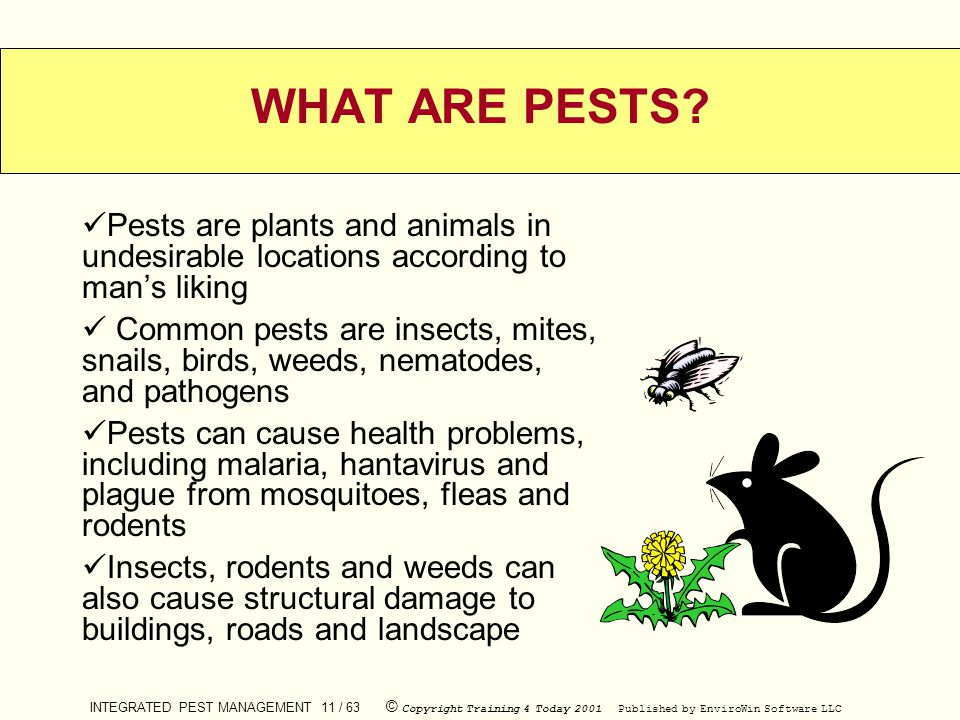INTEGRATED PEST MANAGEMENT 11 / 63 © Copyright Training 4 Today 2001 Published by EnviroWin Software LLC WHAT ARE PESTS? Pests are plants and animals