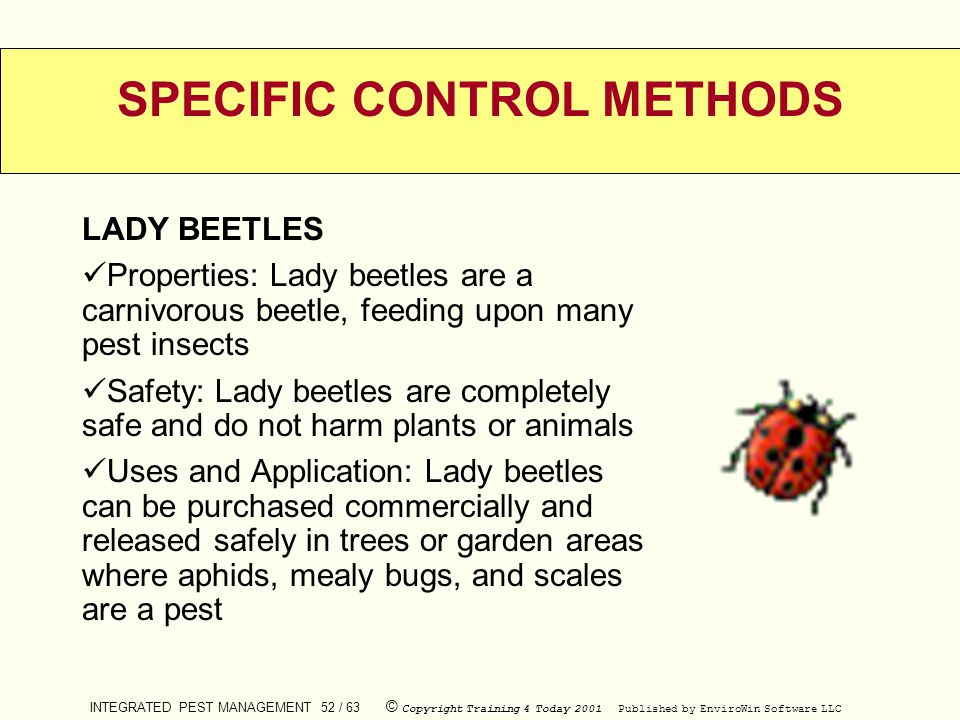 INTEGRATED PEST MANAGEMENT 52 / 63 © Copyright Training 4 Today 2001 Published by EnviroWin Software LLC SPECIFIC CONTROL METHODS LADY BEETLES Propert