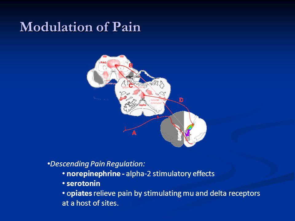 Modulation of Pain Descending Pain Regulation: norepinephrine - alpha-2 stimulatory effects serotonin opiates relieve pain by stimulating mu and delta