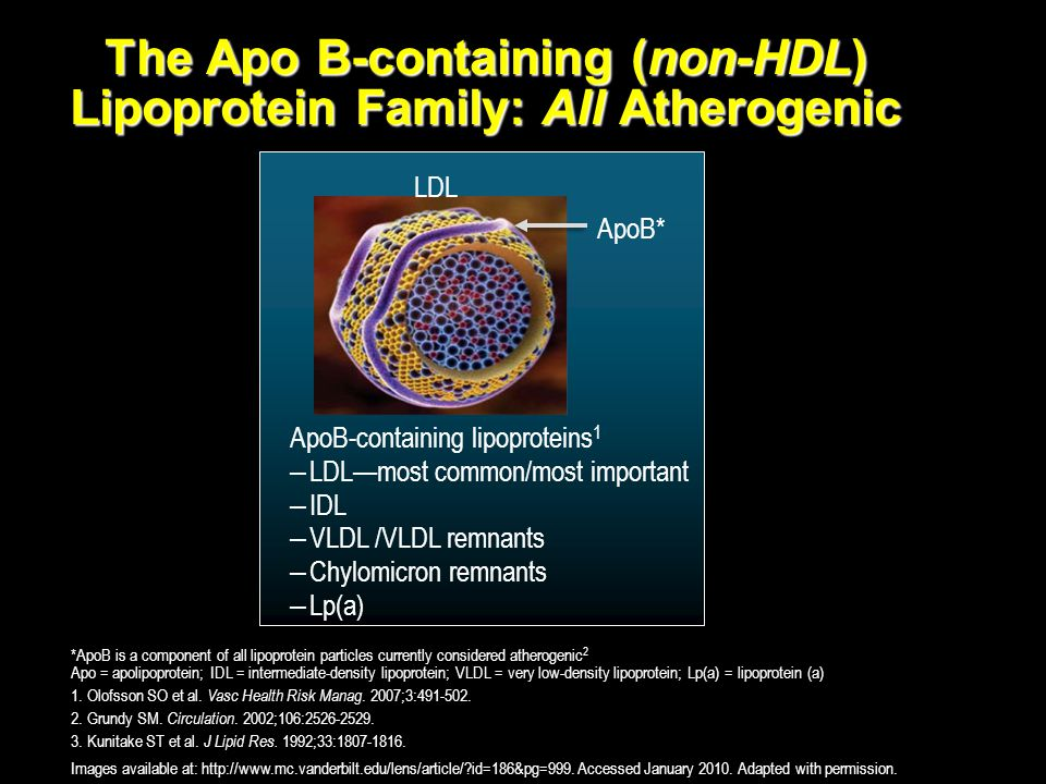 The Apo B-containing (non-HDL) Lipoprotein Family: All Atherogenic *ApoB is a component of all lipoprotein particles currently considered atherogenic