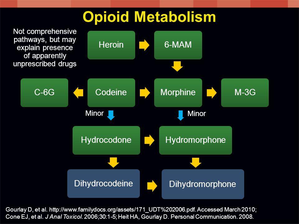 Heroin6-MAMM-3GMorphineCodeineC-6GHydrocodoneHydromorphone Dihydromorphone Opioid Metabolism Dihydrocodeine Minor Gourlay D, et al. http://www.familyd