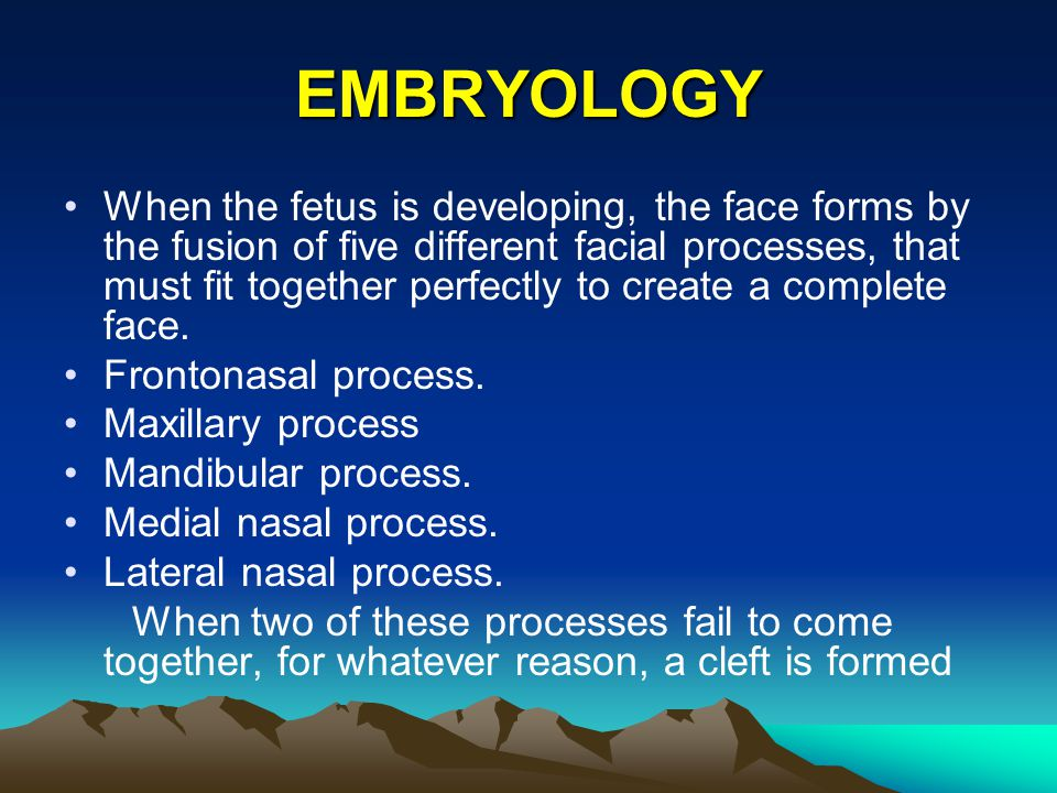 EMBRYOLOGY When the fetus is developing, the face forms by the fusion of five different facial processes, that must fit together perfectly to create a
