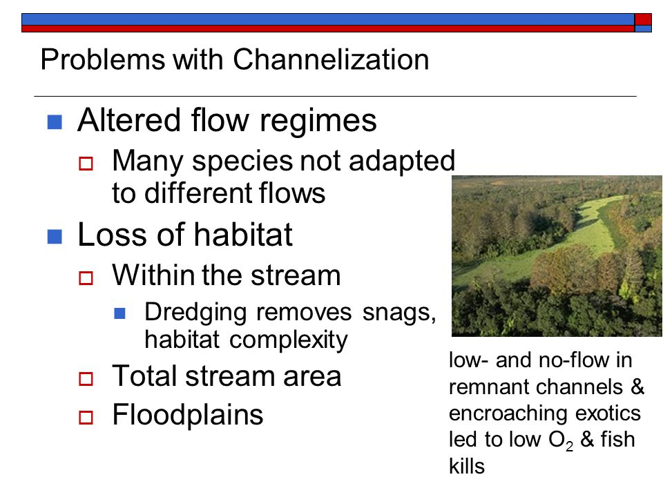 Problems with Channelization Altered flow regimes  Many species not adapted to different flows Loss of habitat  Within the stream Dredging removes snags, habitat complexity  Total stream area  Floodplains low- and no-flow in remnant channels & encroaching exotics led to low O 2 & fish kills