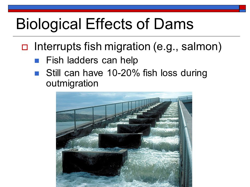 Biological Effects of Dams  Interrupts fish migration (e.g., salmon) Fish ladders can help Still can have 10-20% fish loss during outmigration