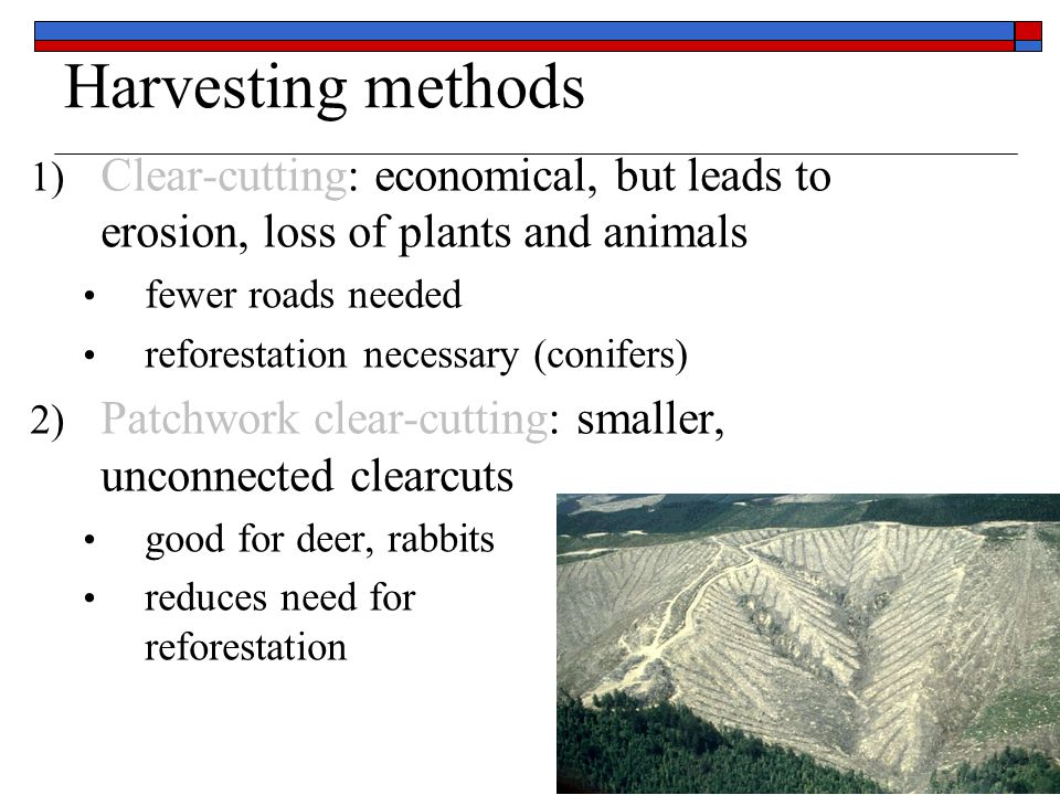 Harvesting methods 3) Selective harvesting: individuals trees taken Less economical More roads Leaves a more natural forest Debate over Healthy Forest Initiative Bush policy to decrease risk of forest fires by allowing selective logging and stream-lining legal process Fire Prone Trees ≠ Desirable Timber Trees