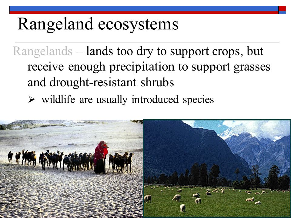 Rangeland costs  Economic & energy – usually low common use lands, breed animals, walk  Environmental – high selective grazing can change plant diversity, increase non-native grasses over-grazing desertification – process of converting arid and semi-arid lands to desert (loss of productivity)