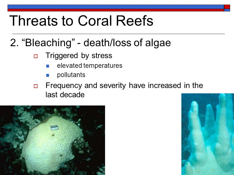 Threats to Coral Reefs 2.