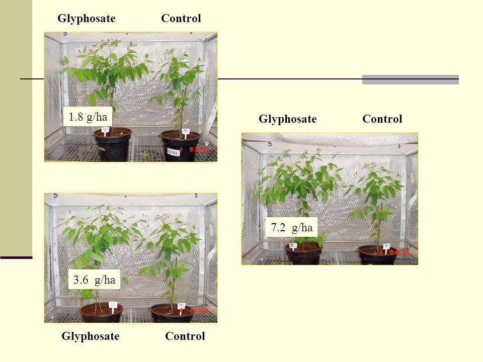 Glyphosate Control 1.8 g/ha 3.6 g/ha 7.2 g/ha Glyphosate Control