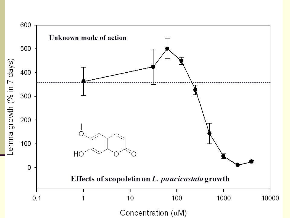RTPCR of phenyalalaine ammonia-lyase Light off Light on