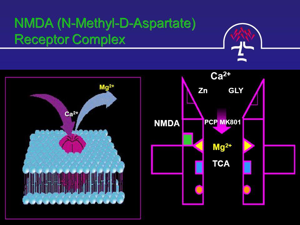 NMDA (N-Methyl-D-Aspartate) Receptor Complex Ca 2+ ZnGLY PCP MK801 Mg 2+ TCA NMDA Ca 2+ Mg 2+