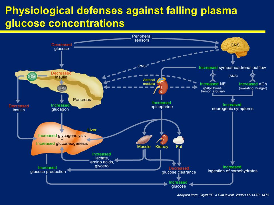 Physiological defenses against falling plasma glucose concentrations Adapted from: Cryer PE. J Clin Invest. 2006;116:1470–1473