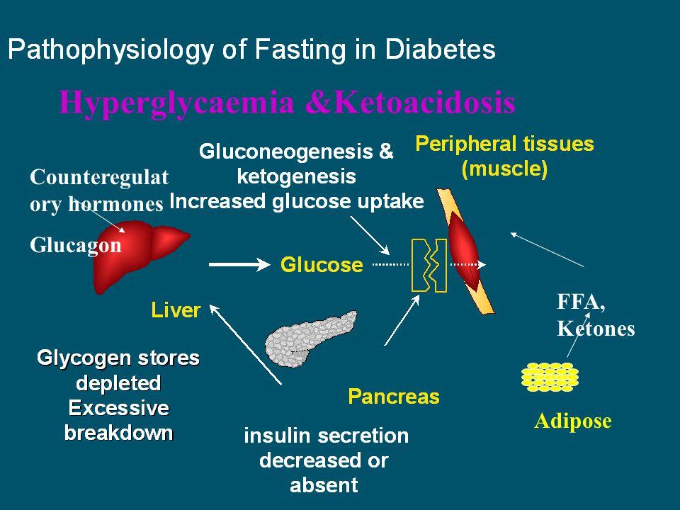 Adipose FFA, Ketones Counteregulat ory hormones Glucagon Hyperglycaemia &Ketoacidosis