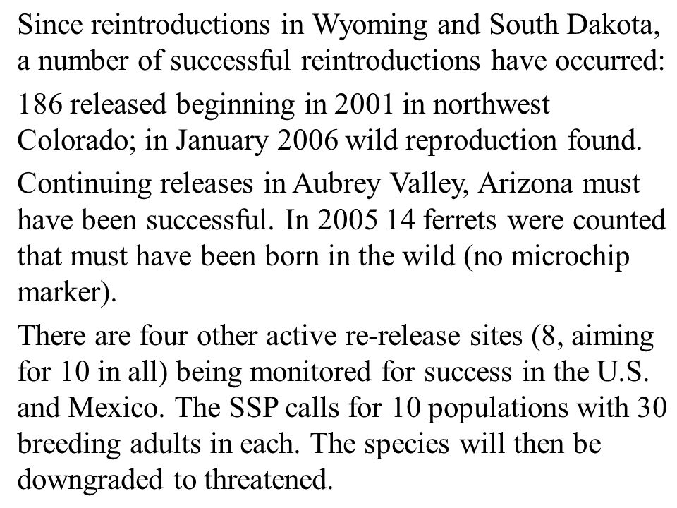 Since reintroductions in Wyoming and South Dakota, a number of successful reintroductions have occurred: 186 released beginning in 2001 in northwest Colorado; in January 2006 wild reproduction found.