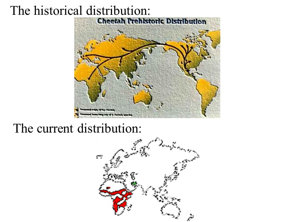 The historical distribution: The current distribution: