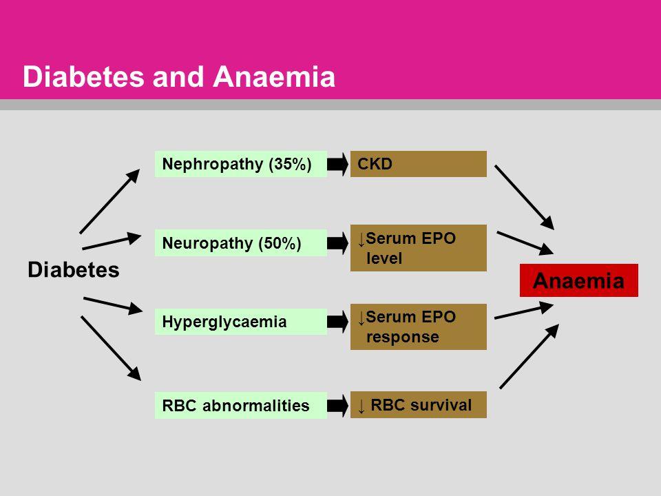 Diabetes and Anaemia Diabetes Hyperglycaemia ↓Serum EPO response RBC abnormalities ↓ RBC survival Anaemia Nephropathy (35%)CKD Neuropathy (50%) ↓Serum EPO level