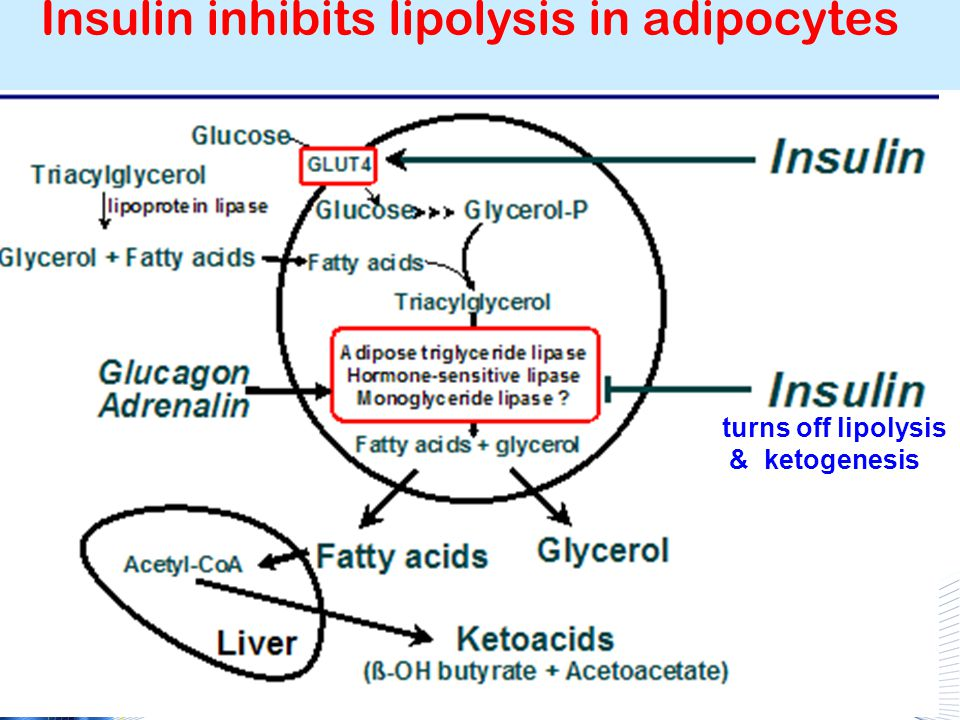 Nutritional ketosis: CHO restriction Ketones produced in liver from oxidation of fatty acids When dietary CHO < 50 gm/day ketones secreted in urine Mild ketosis (no reduction in pH or metabolic acidosis) Fatty acids & ketones major energy sources