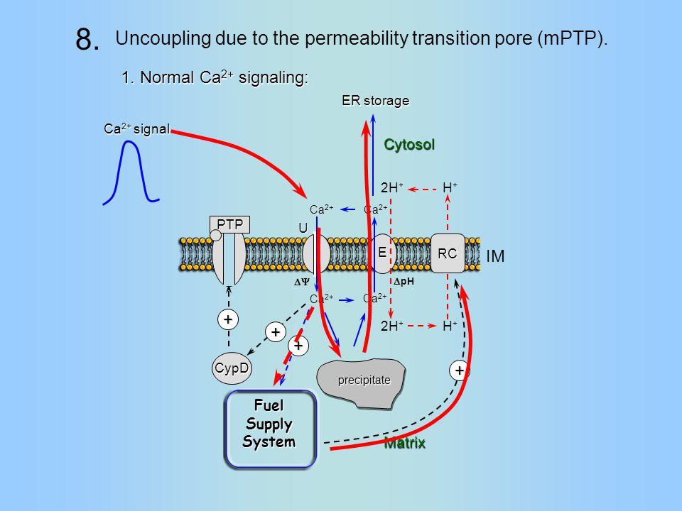 RC H+H+ H+H+ Ca 2+ 2H + IM Matrix  pH  Ca 2+ 2H + U E precipitate + CypD + + Fuel Supply System PTP Cytosol Ca 2+ signal ER storage + 1.