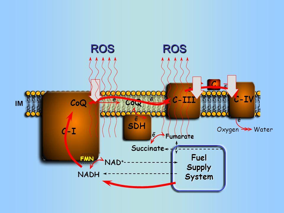 Oxygen C-III SDH C-I FMN C C-IV IM NADH NAD + Water e e e e e CoQ ROSROS ROS ROSROS Succinate Fumarate e e Fuel Supply System