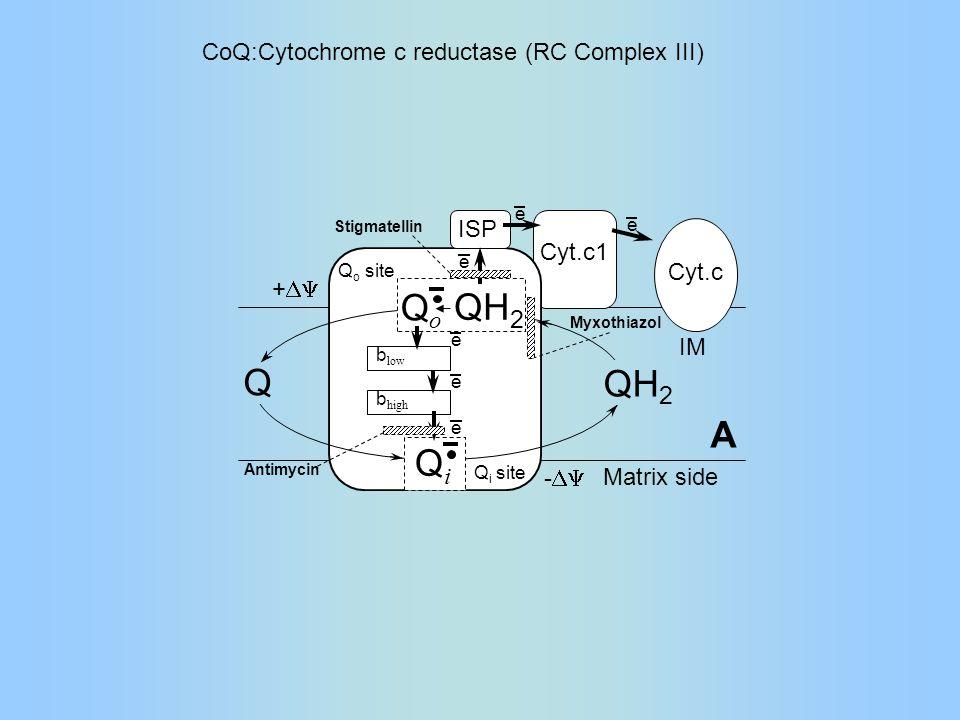 Q i site Q o site b low b high e e e e e e ISP Cyt.c1 Cyt.c Myxothiazol Antimycin Stigmatellin QiQi QoQo QH 2 Q Matrix side -  +  IM A QH 2 CoQ:Cytochrome c reductase (RC Complex III)