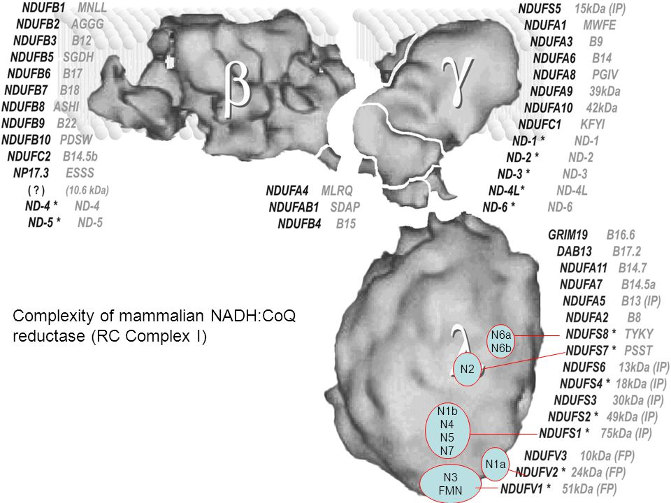 N3 FMN N1b N4 N5 N7 N2 N6a N6b N1a Complexity of mammalian NADH:CoQ reductase (RC Complex I)