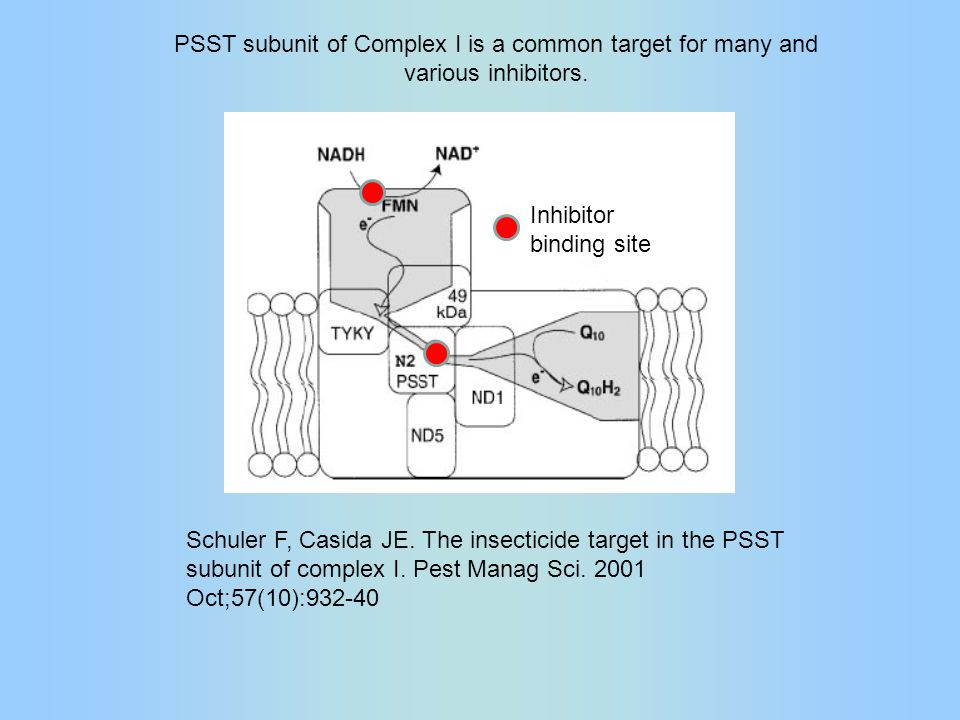 Schuler F, Casida JE. The insecticide target in the PSST subunit of complex I.