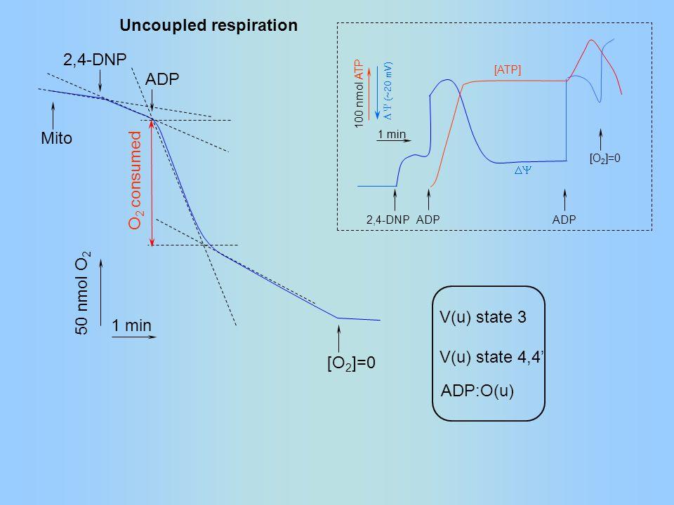 50 nmol O 2 1 min ADP [O 2 ]=0 2,4-DNP Mito O 2 consumed Uncoupled respiration  ADP [O 2 ]=0 100 nmol ATP 1 min ADP [ATP]  (~20 mV) 2,4-DNP V(u) state 3 V(u) state 4,4' ADP:O(u)